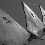 détail dorsale béton